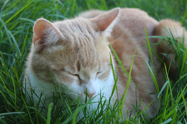 Sieste au jardin