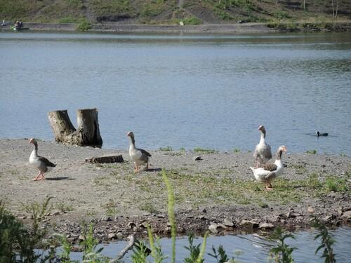 Balade à l'étang de pêche