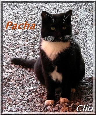 LOGO PACHA