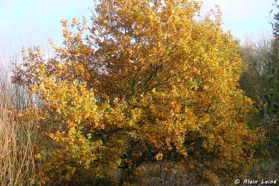 Dernières vues d'automne