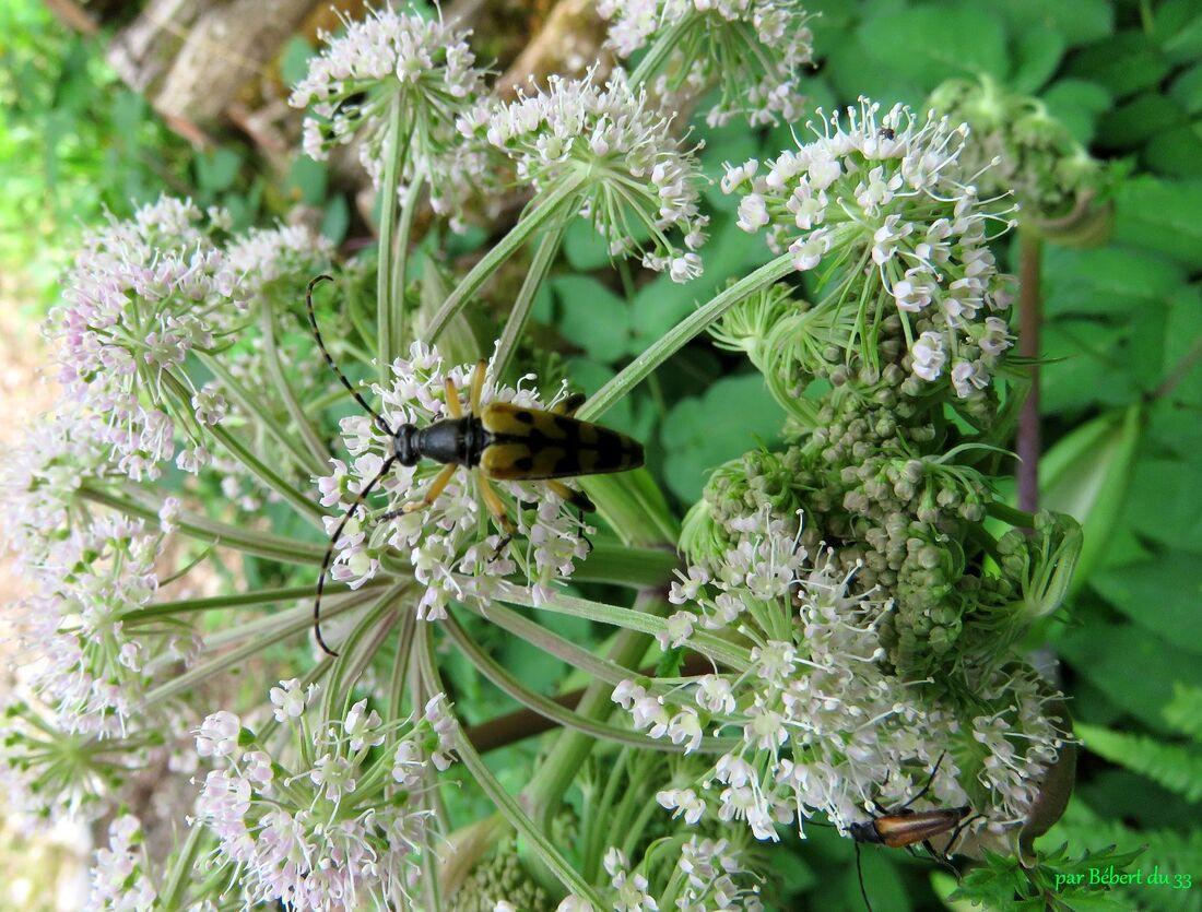 insectes sur fleurs