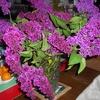 Fleur Bouquet 3.jpg