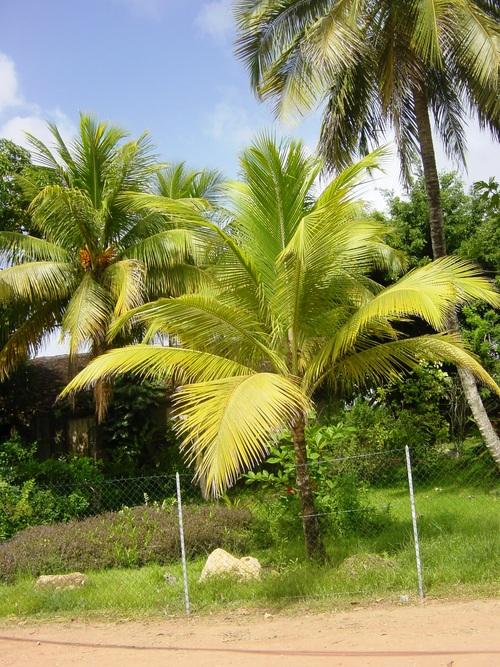 Les Trois-Îlets en Martinique