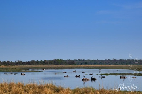 On the Okavango river - Mahango Bwabwata NP buffalo core area