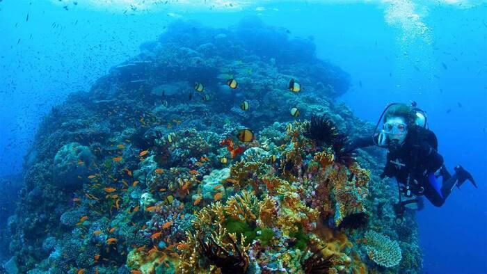 L'image du Jour La dame des océans
