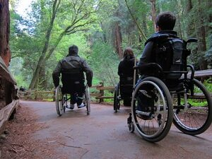 books wheelchair forest nature park