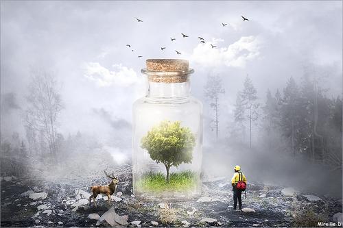 Forêt Sauvegardée (Photomontage)