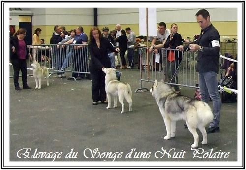 Exposition canine de Pau (17 avril 2016)
