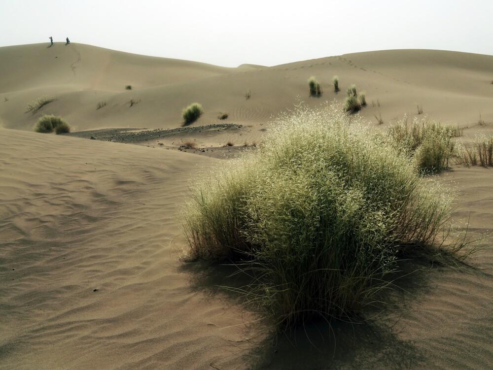 Dunes de Oumjrane