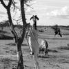dans le Sahel.JPG