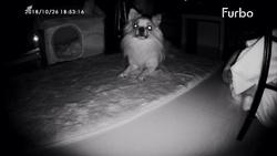 Furbo Dog Caméra