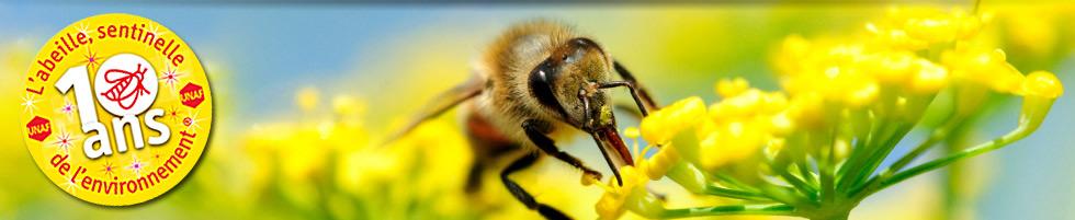 Abeille Sentinelle - apiculture, apiculteur, unaf, miel, cruiser, pollinisation