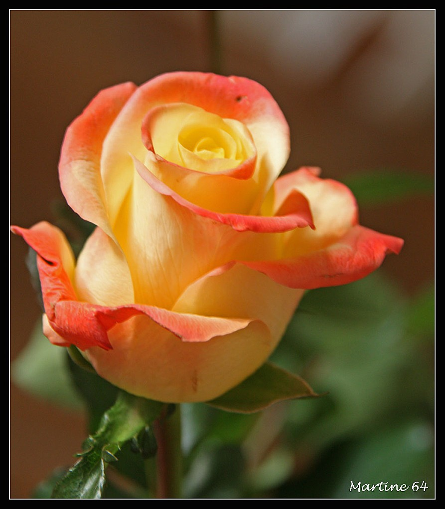 Fleurs & jardin 7970
