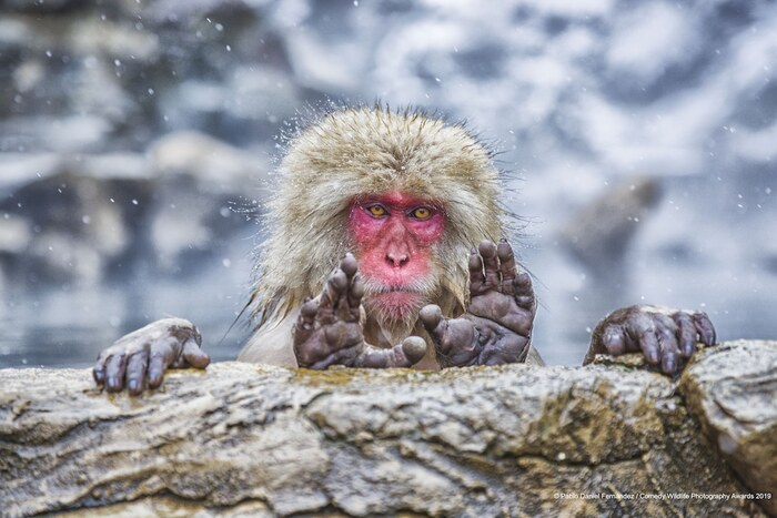 Premiers temps forts des Comedy Wildlife Photography Awards 2020