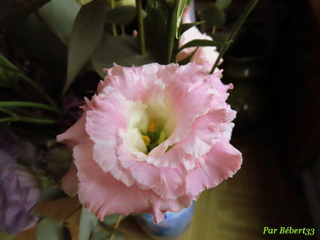 Lisianthus (Eustoma grandiflorum)