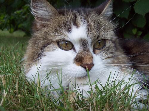 Gypsy, 4 ans aujourd'hui !!!!!!!!!