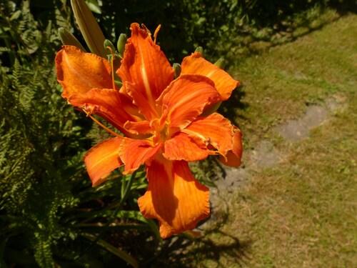 Les fleurs des autres