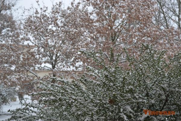 fonsorbes neige Arbustres