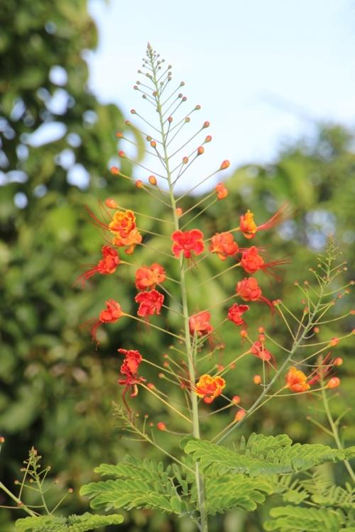 Quelques fleurs du Costa Rica