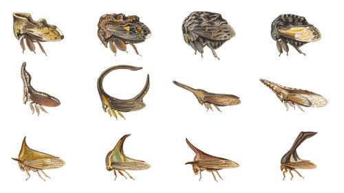 Les mini-monstres d'Amazonie