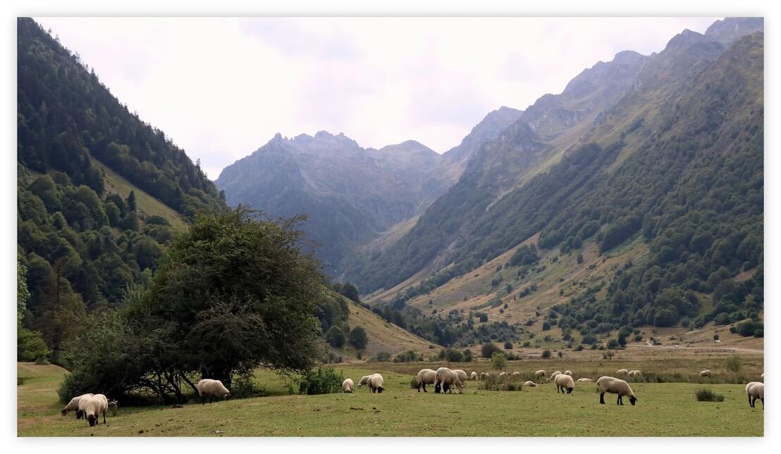 Balade dans les hautes-Pyrénées (Lac d'Estaing - Septembre 2016)