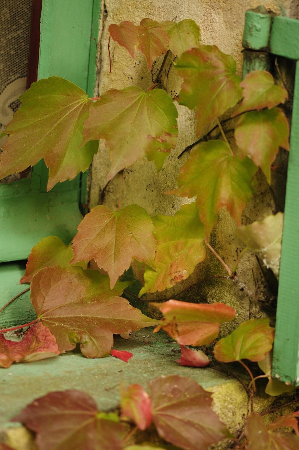 Le bel automne est là