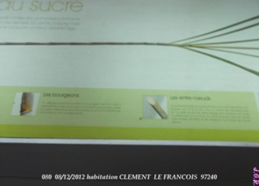 HABITATION CLEMENT  LE FRANCOIS