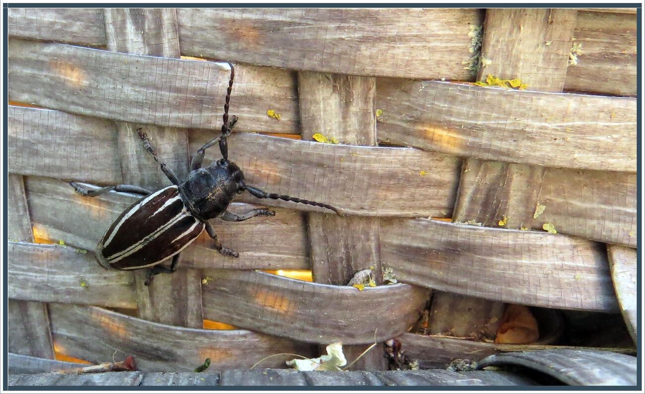 Rien ne va plus ! Et quel est cet insecte ?