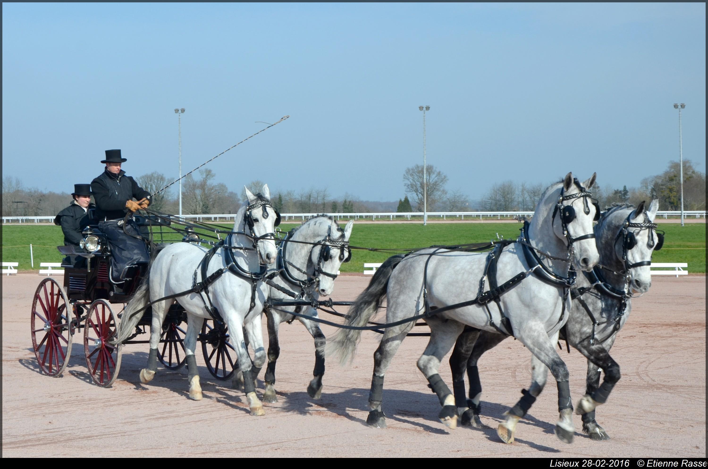28 Février: Quelques images du Concours d'attelage de Lisieux: GbhBZDvV9pXacx7NVOXFhJ2HANY