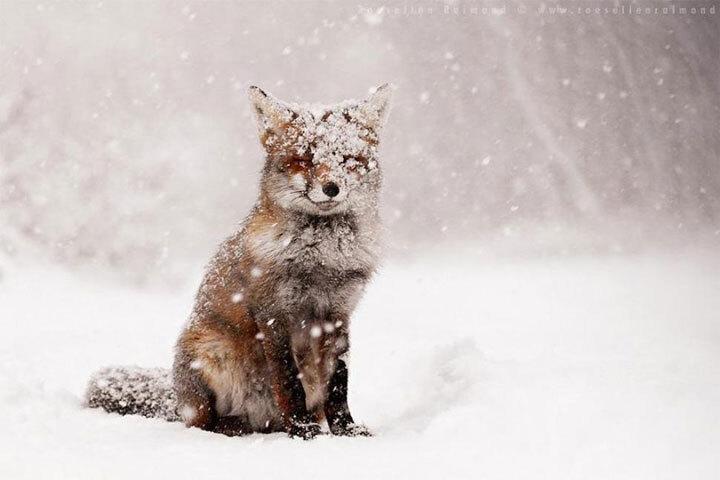 xx-animaux-dont-la-beaute-est-sublimee-par-les-couleurs-hivernales1