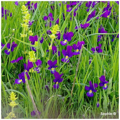 Fleurs sauvages .