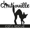 chatouillecatsrescue