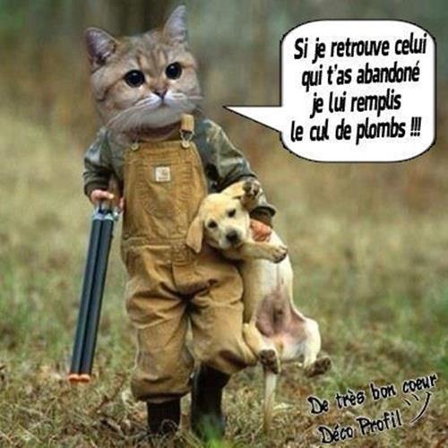 Les chats dans notre vie