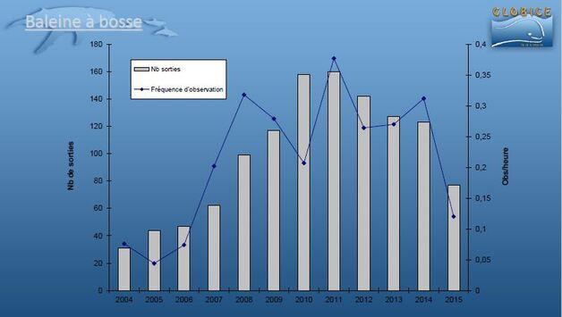 2015 - Présence de Baleine en forte baisse ... la faute à Nino ?