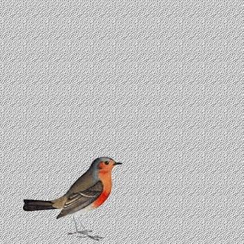 Fond de blog Oiseaux
