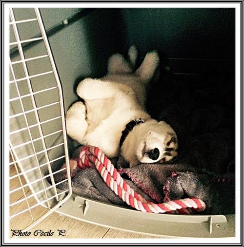 Silence, on dort ! (1er mars 2015)
