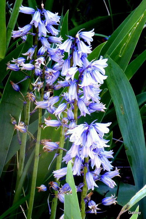 Des fleurs dans mon jardin en mai