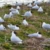 3éme jour dans le parc du marquenterre les oiseaux couvent