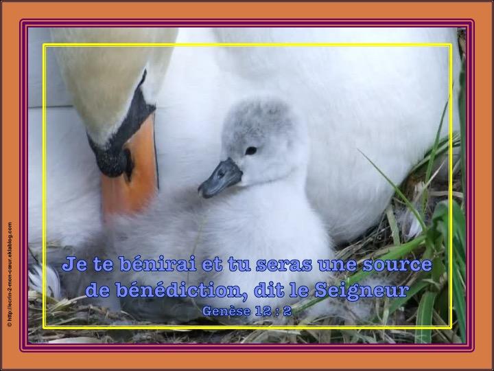 Je te bénirai - Genèse 12 : 2