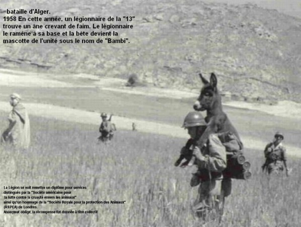 Bambi-l-ane-de-la-legion.jpg