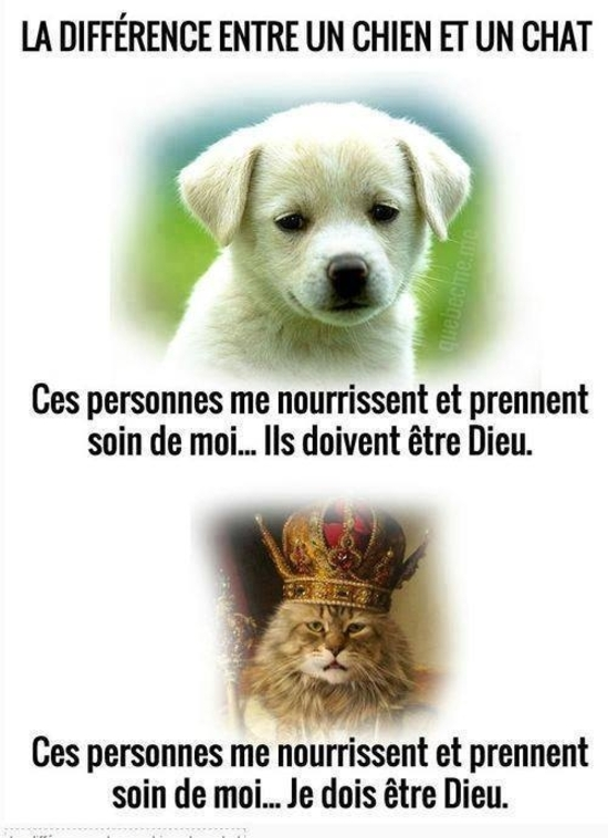 chien chat différence