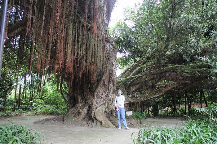 Le jardin botanique de Terra Nostra