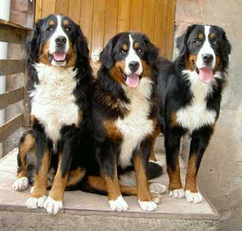 C'est les chiens de nos voisins!!!