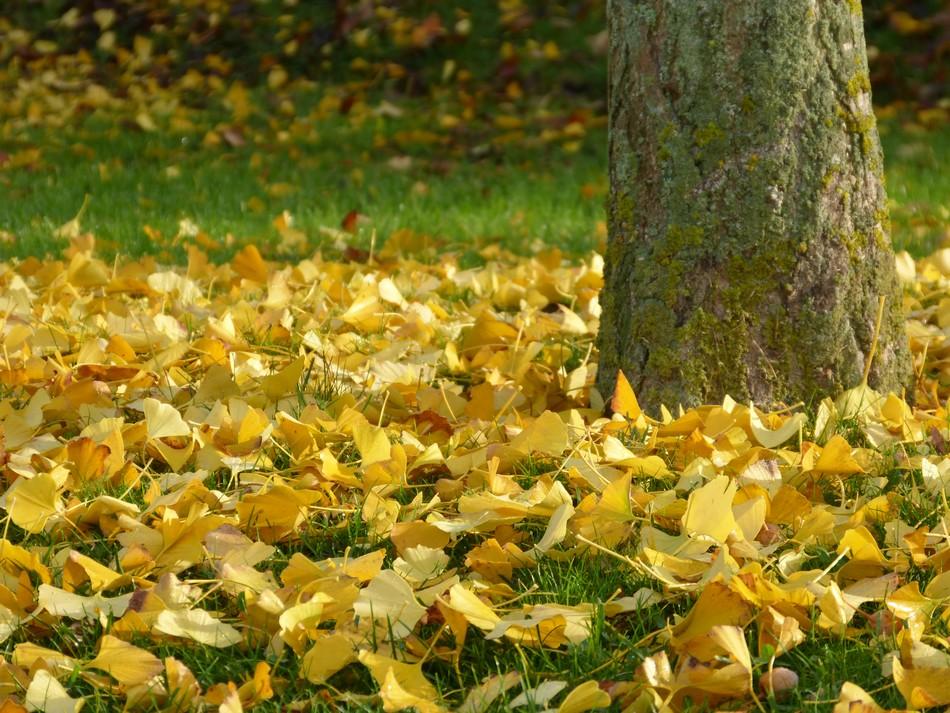 Les couleurs d'automne, fin novembre