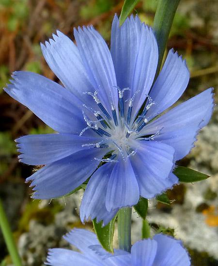 bleu11