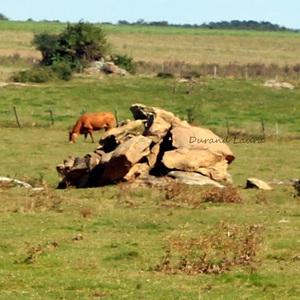 Pierres dans les champs à vaches