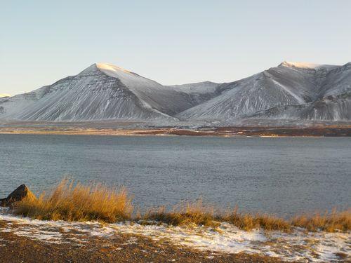 Les chevaux d'Islande. (5)