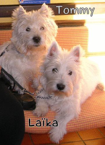Tommy et Laïka ... parenthèse