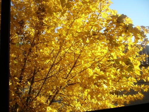 Fleurs, feuilles et baies d'automne