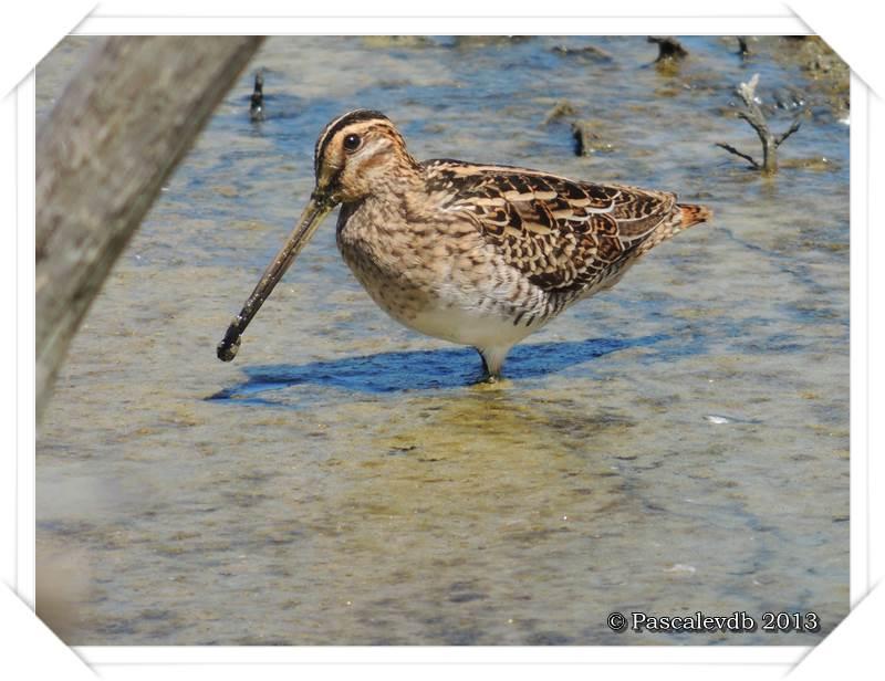 Pause ornithologique estivale au Teich - 10/12